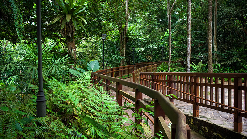 Image of expat living near to Bukit Timah Nature Reserve in Singapore